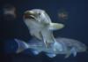fisch-mit-oder-ohne-kopf-nachhaltiger-fischkonsum-dorsch