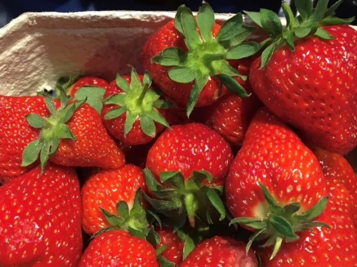 saisonkalender-juni-erdbeerzeit